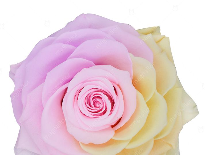 Tmx Sweet Sensation 4 51 932572 Fort Lauderdale, FL wedding florist