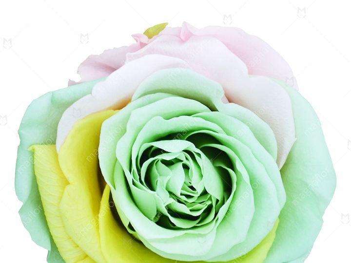 Tmx Sweet Sensation 6 51 932572 Fort Lauderdale, FL wedding florist
