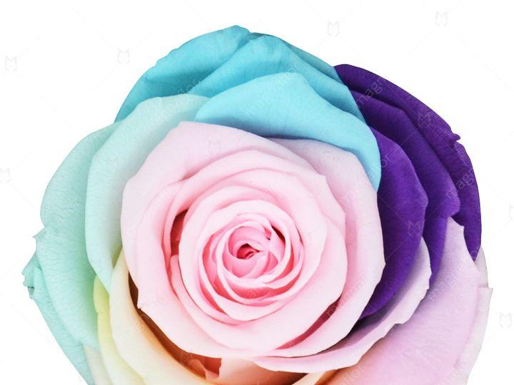 Tmx Sweet Sensation 7 51 932572 Fort Lauderdale, FL wedding florist