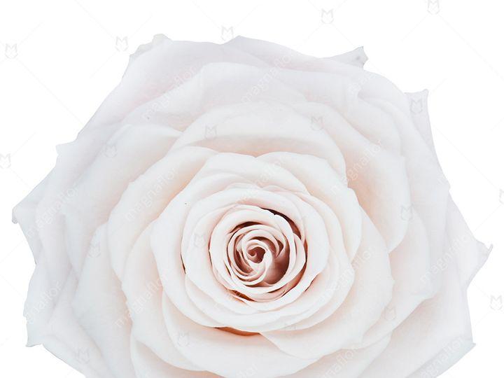 Tmx Vintage Sweet Sensation 51 932572 Fort Lauderdale, FL wedding florist