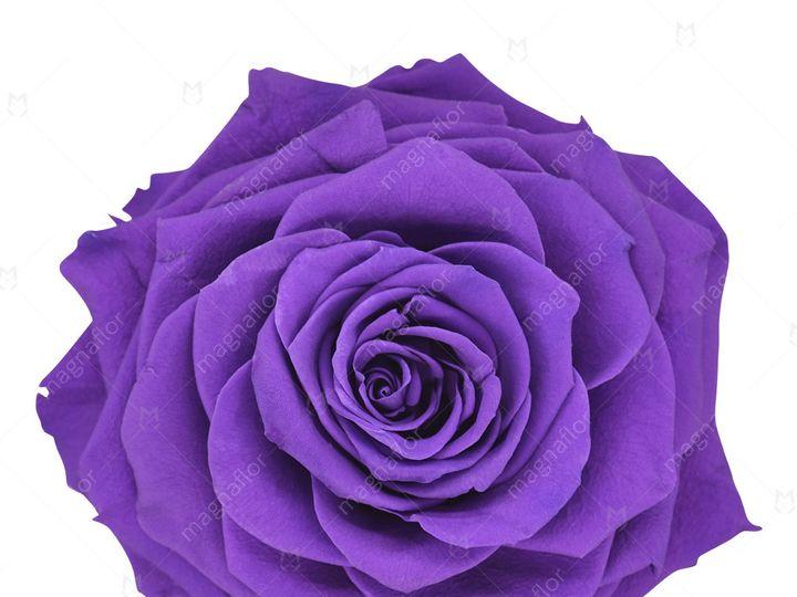 Tmx Violet Perfection 51 932572 Fort Lauderdale, FL wedding florist
