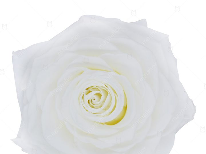 Tmx White Perfection 51 932572 Fort Lauderdale, FL wedding florist