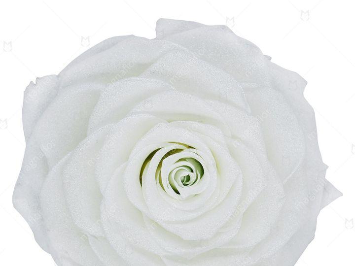 Tmx White Premium Class 51 932572 Fort Lauderdale, FL wedding florist