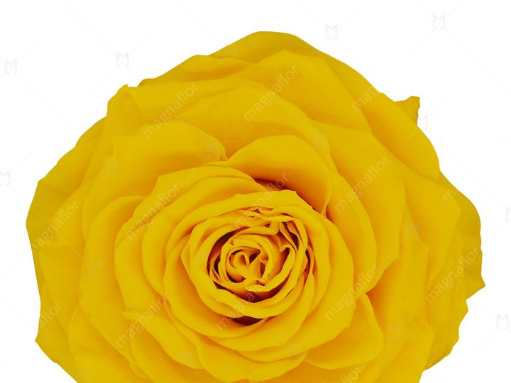 Tmx Yellow Perfection 51 932572 Fort Lauderdale, FL wedding florist