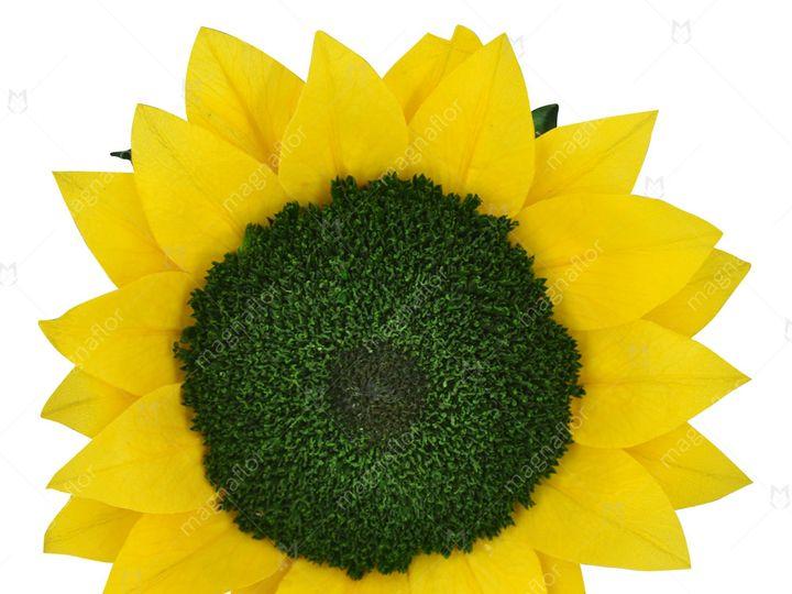Tmx Yellow Sunflower 51 932572 Fort Lauderdale, FL wedding florist