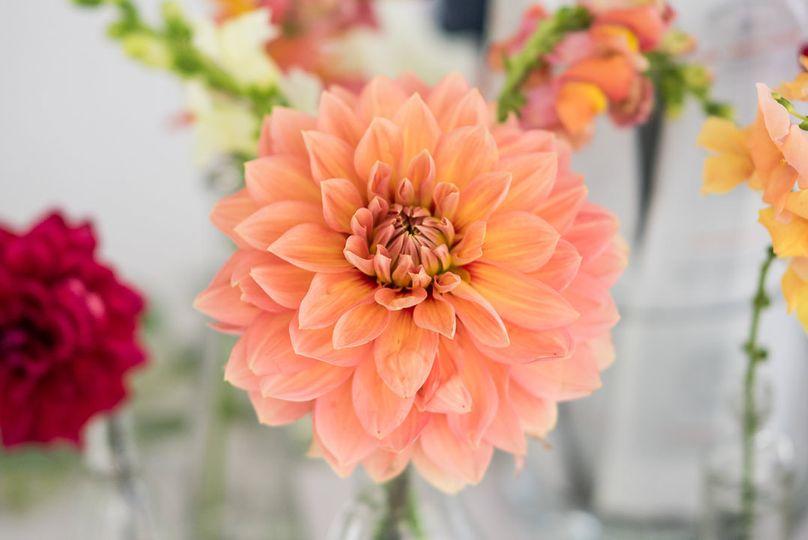 Peach colored