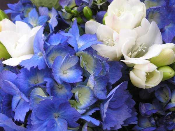 Cattails Florist