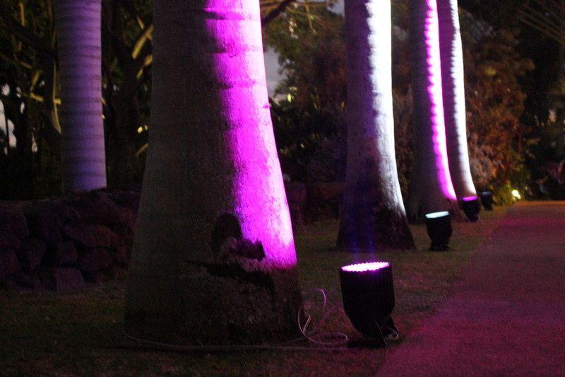uplit palm trees