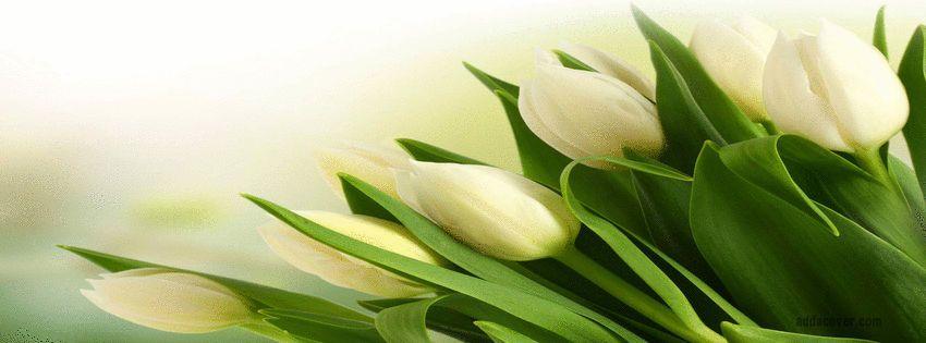 6b2130f570d1fadc tulips best