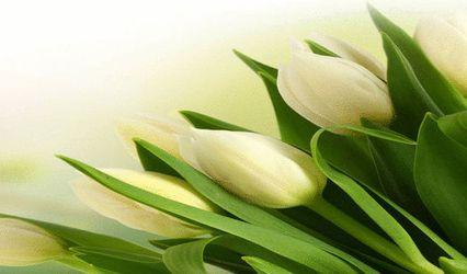 Sacred Herbals 1