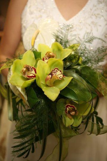 tropicalorchids