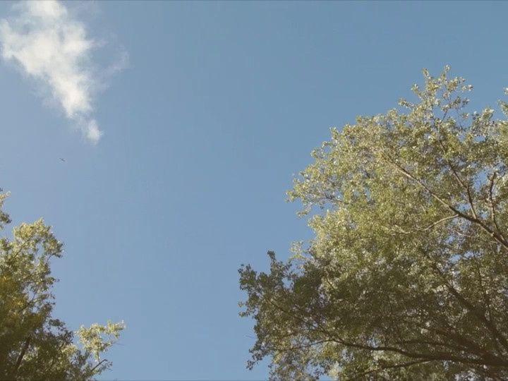 Tmx 1468270631948 Trees Sky Brooklyn wedding videography