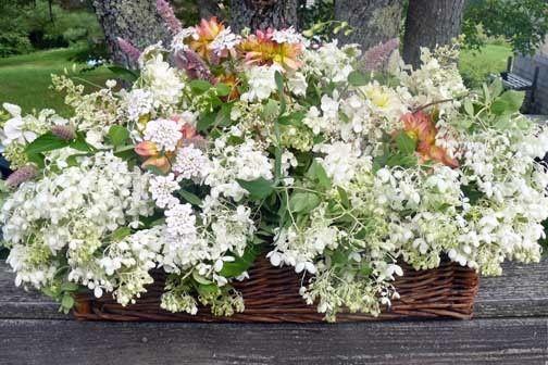 Hydrangea Basket from Dan's Flower Farm, Sedgwick Maine