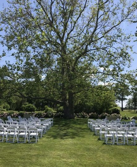 Our beautiful Sycamore tree makes a gorgeous backdrop!