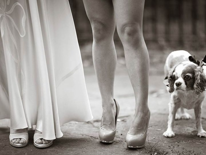 Tmx 1428081997757 Jen Megan Dog 1140x729 New York, NY wedding photography