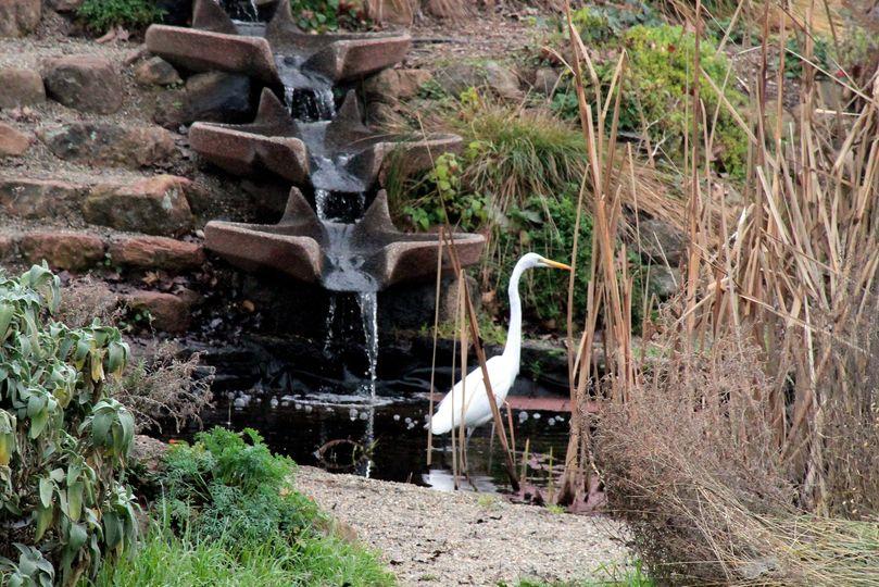flowform egret