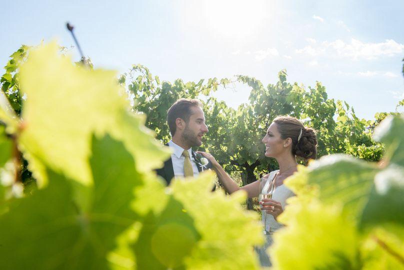 Shooting on vineyard