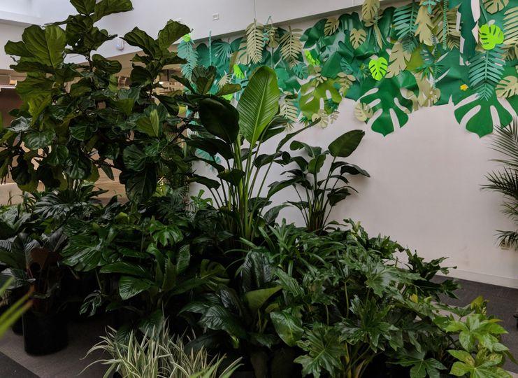 Tropical plant rental