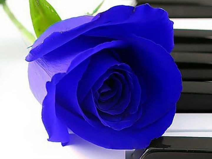Tmx 1383143994707 Piano Rose Blu Tampa wedding ceremonymusic