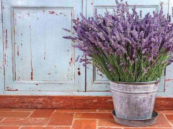 Tmx 1435756957670 Lavender In Bucket Novi wedding favor