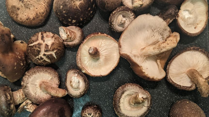We grow our own mushrooms