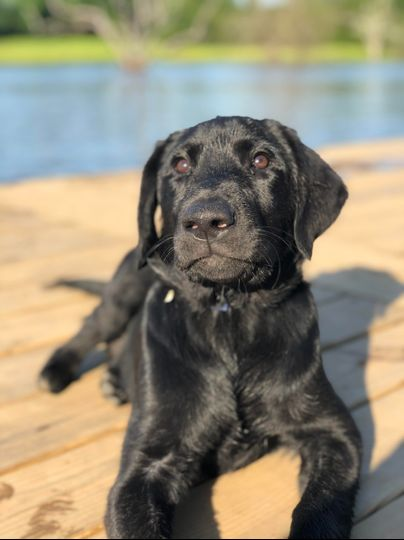 Murphy the guard dog