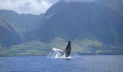 Pride of Maui
