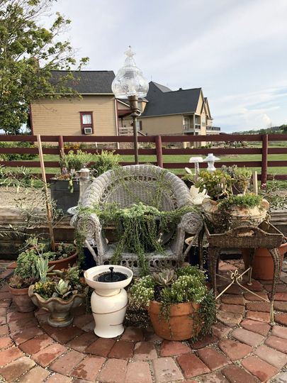 Succulents on the Patio