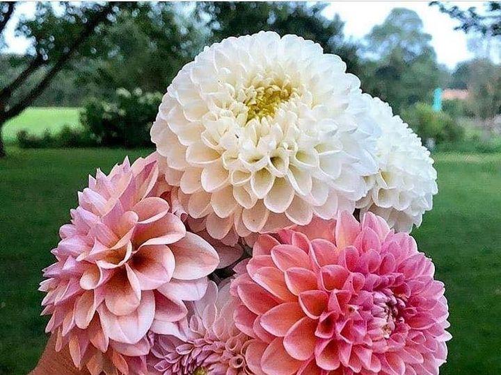 Tmx 5 51 1073703 158566961059515 Cheney, WA wedding florist