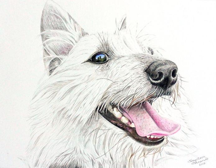 Lily the Elkhound/Westie Mix