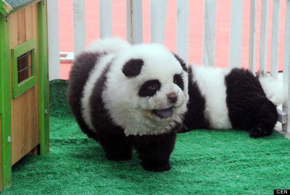zkr60 panda dog3