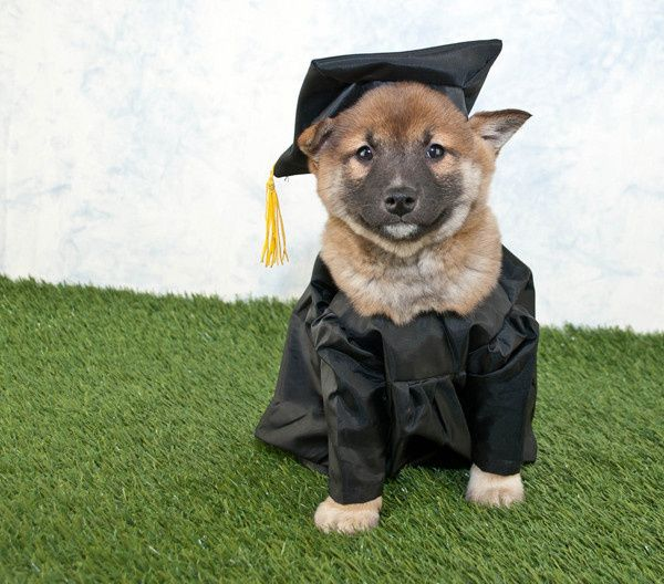 puppy dog graduation