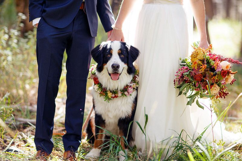 Newlyweds' dog