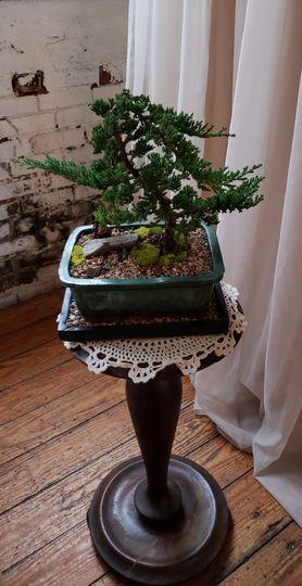 Tree ritual