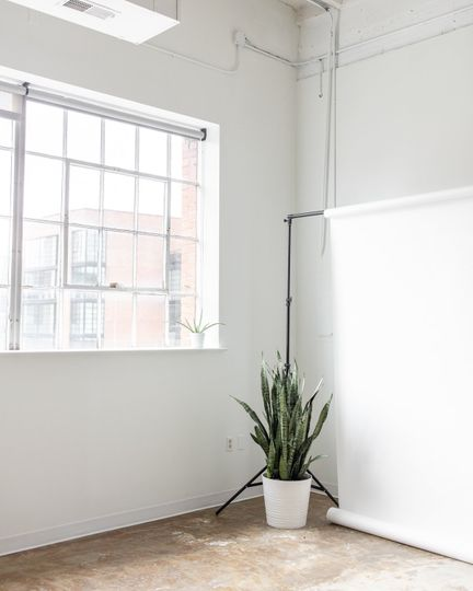 Plant in a corner
