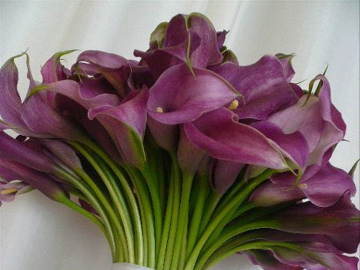 Tmx 1298926589647 Lavendercallas Kirkland wedding florist