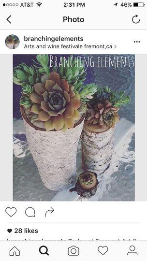 Birch wood succulent arrangements