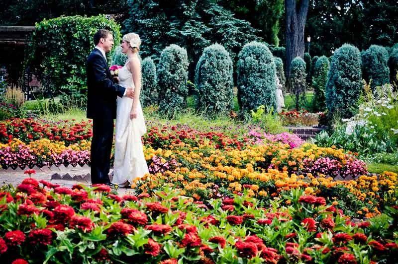 stellar events pic flowers