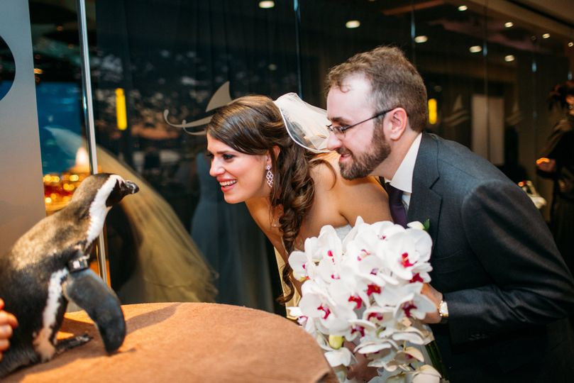 Bride and groom with a penguin