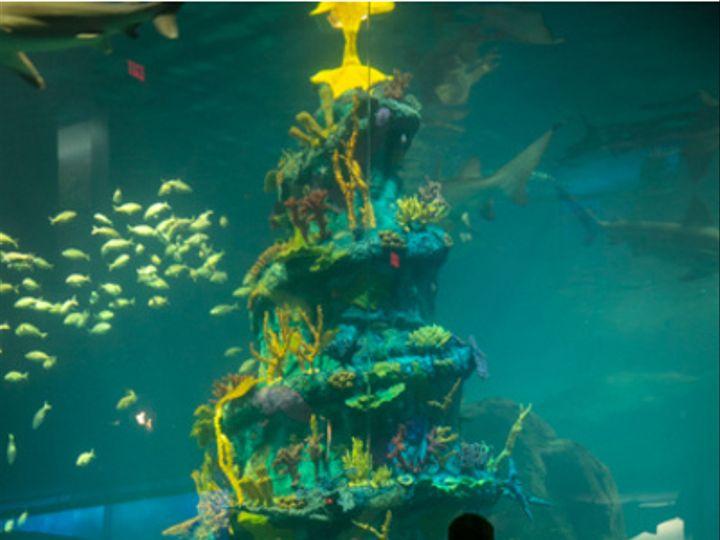 Tmx Holding Hands In Front Of Underwater Christmas Tree 51 2813 V1 Camden, NJ wedding venue