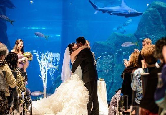 Tmx I Do Kiss 51 2813 160520094463193 Camden, NJ wedding venue