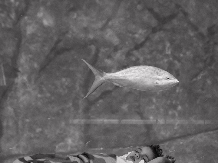 Tmx Little Boy Sleeping In Front Of Shark Window 51 2813 Camden, NJ wedding venue
