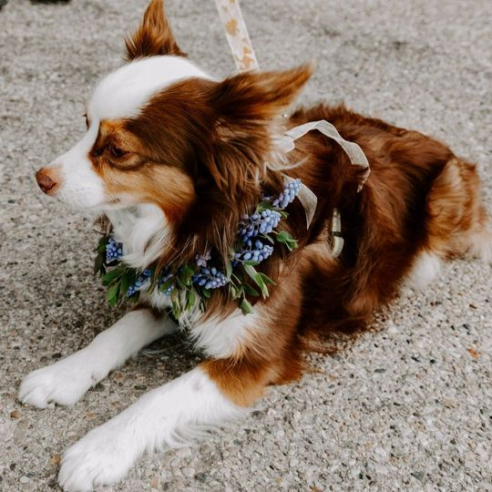 Puppy floral collars