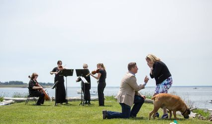 Affordable Elegance String Ensembles