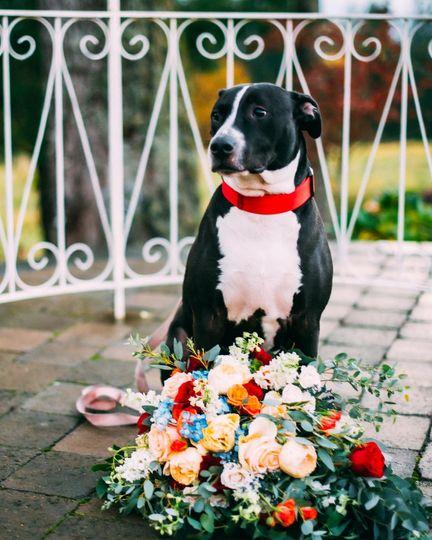 Brides Furry Best Friend!