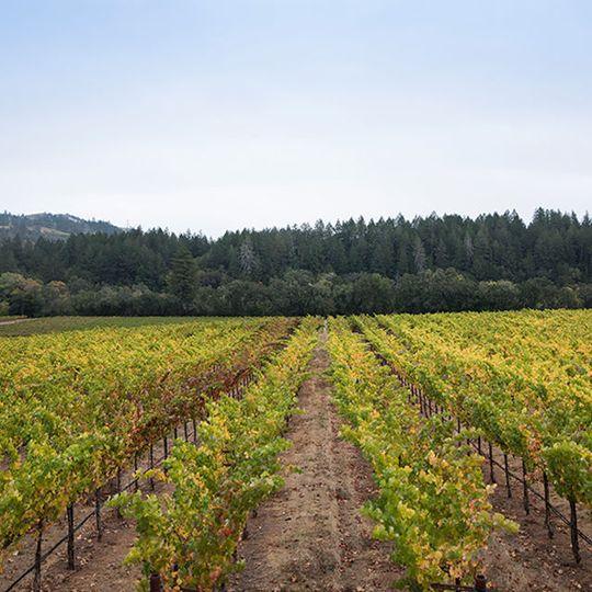 Landslide Vineyard