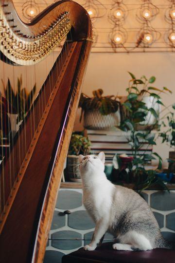 Kitties love the harp too!