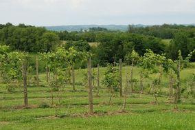 Na zdravie Vineyard and Winery, LLC