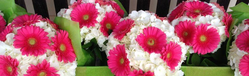 Gerbera Daisies and Hydrangea