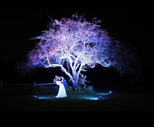 Up lighting on a tree